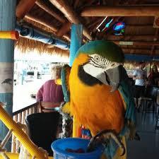 Tiki Hut Cape Coral Fl Nauti Parrot Tiki Hut 25 Photos U0026 32 Reviews Tiki Bars 3448