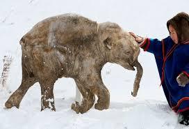 science radio frozen mammoths kgov