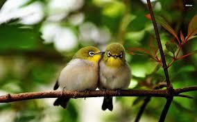 birds on a branch walldevil