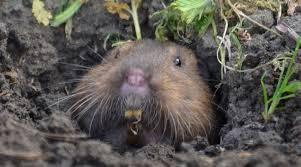 3 similarities groundhog movie actual