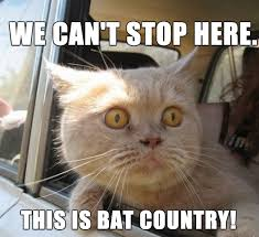 Funny Meme Saying - funny cat saying we can t stop here funny meme