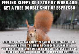 Squirrel Meme - hyper alert squirrel meme on imgur