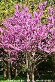 hgic 1021 redbud extension clemson south carolina