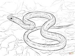 plains garter snake coloring page free printable coloring pages