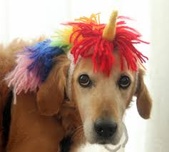 unicorn costume for dogs unicorn mane and horn for large