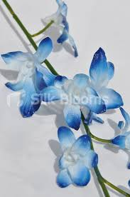 Blue Orchids Shop Artificial Galaxy Blue Orchids Dyed Phalaenopsis Orchids