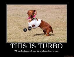 Wiener Dog Meme - funny weiner dog jokes weiner best of the funny meme