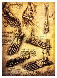 ancient anatomical drawings made by leonardo davinci a study