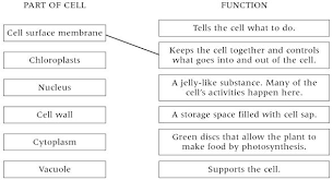 plants cells and their functions images