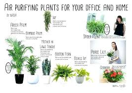 best plants for air quality good house plants image gallery of remarkable air cleaning plants