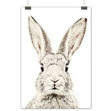 rabbit poster the youngstersmagnetic poster rabbit 62x95cm the youngsters