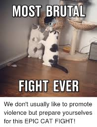 Cat Fight Meme - 25 best memes about epic cat fight epic cat fight memes