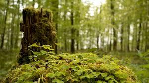 Aldi Bad Nauheim Der Friedwald Lich In Der Wetterau In Hessen Stellt Sich Vor