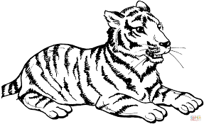 tiger sits coloring page free printable coloring pages