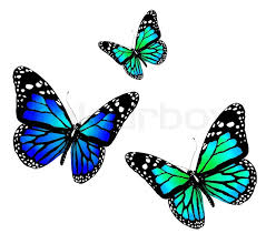 three butterflies of blue color on a white background stock