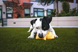 puppy toys for learning how to be a dog breeder
