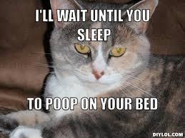 Cat Meme Maker - ceiling cat meme generator theteenline org