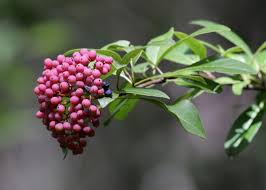 bird friendly native plants audubon your go to local experts native plant retailers audubon north
