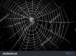 halloween spiders background photography spider web wallpapers desktop phone tablet