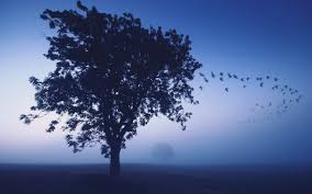 wallpaper 2560x1600 tree evening lonely birds wedge