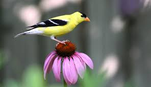shade loving native plants native plants for birds audubon new york