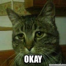 Depressed Cat Meme - cat ok