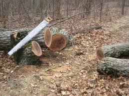a good cross cut saw for firewood hearth com forums home