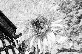 lunapic free online photo editor pencil sketch