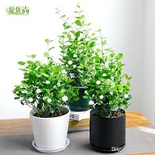 Small Desk Plants Indoor Small Plants String Of Pearls Indoor Plants Pearls Plants