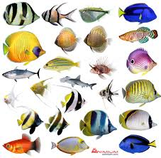 tropical fish 3d model collection free 3d models
