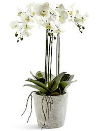 artificial orchids artificial flowers marks spencer london ca