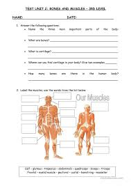 muscle worksheets free worksheets library download and print