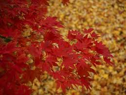 why do leaves change color and turn howstuffworks