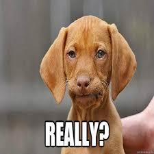 Annoyed Dog Meme - iphone download wallpaper annoyed dog meme