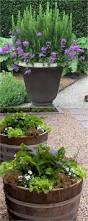 Interior Garden Plants by 2127 Best Creative Gardening Ideas Images On Pinterest Garden