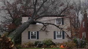 tree damage repair cornerstone restoration services