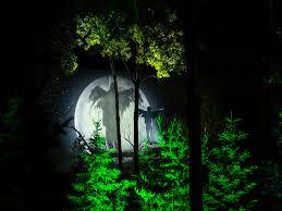 Lights At The Zoo by Anima Lumina Illuminated Night Walk At The Zoo Sauvage St