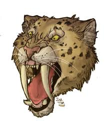 saber tooth tiger drawing saber tooth tiger skull saber