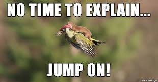 Weasel Meme - nothing to see here just a weasel riding on a woodpecker meme on