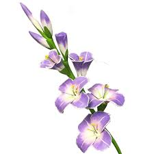 gladiolus flowers wooden gladiolus flower injunwood