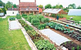 how to get rid of weeds forever telegraph