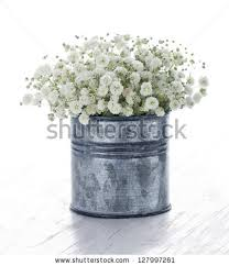 Baby S Breath Bouquets Babys Breath Flower Stock Images Royalty Free Images U0026 Vectors