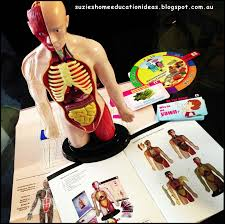 Online Human Body Suzie U0027s Home Education Ideas 8 Ideas For Learning About The Human