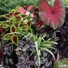partial shade garden plants 6 best garden design ideas
