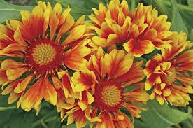 top 10 heat tolerant plants flower gardening birds u0026 blooms