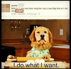 Dog Cooking Meme - i want a dog meme want best of the funny meme