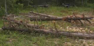 Setting Pole Barn Posts Building An Old Fashioned Pole Barn Part 1 Farm Hand U0027s