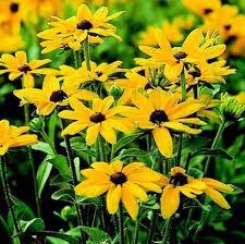 Awesome Looking Flowers Best 25 Full Sun Perennials Ideas On Pinterest Full Sun Flowers