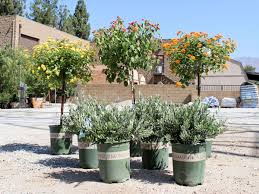 Shrubs For Patio Pots Water Wise Plants Of The Week