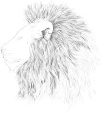 lion profile drawing easy lifelike animals discover